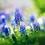 violetskyy