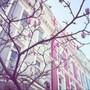 pretty_pastels