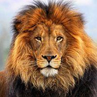 lionz101