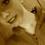 olivia_funkhouser_1234