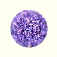 lavendermothball