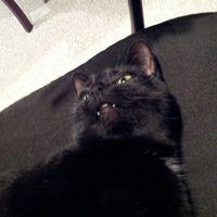 marisssscat