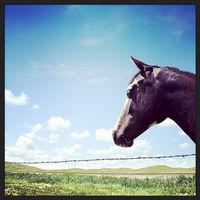 lovehorses123